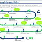 Infografik: Weg von der Rübe zum Zucker